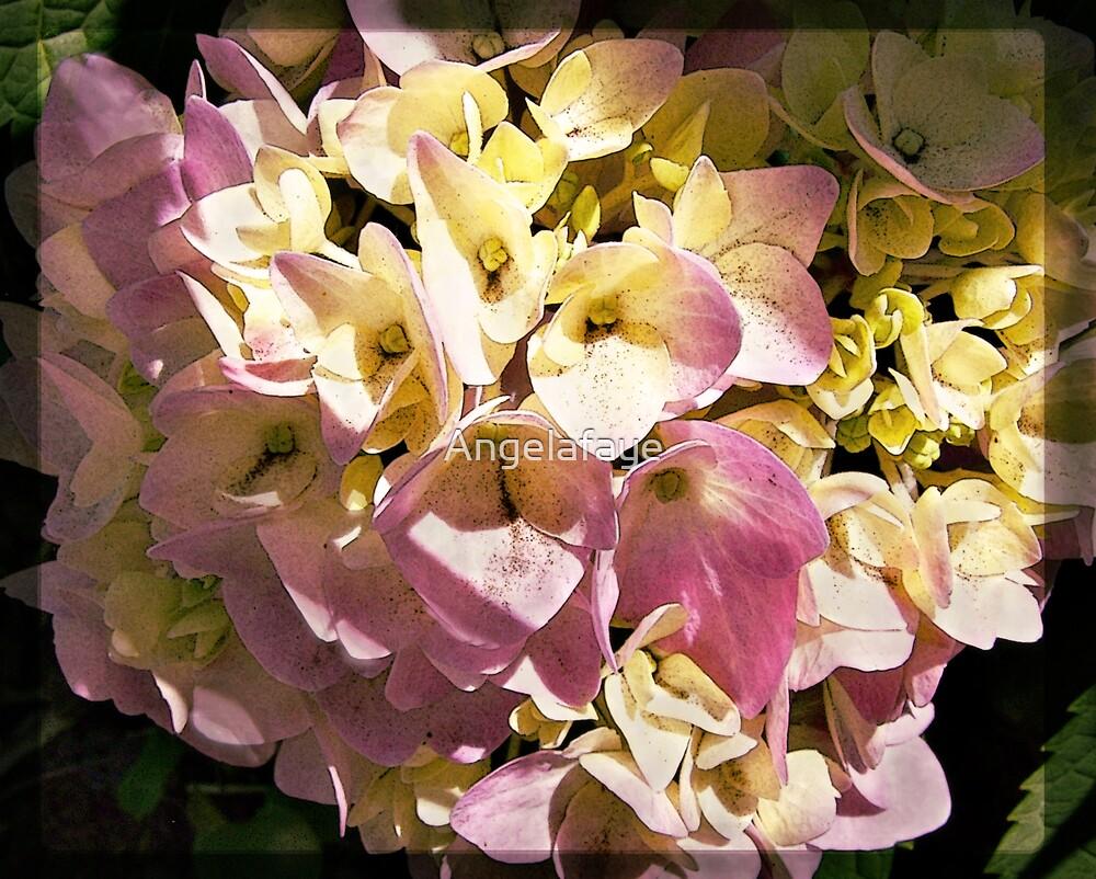 flowers in the sunlight by Angelafaye
