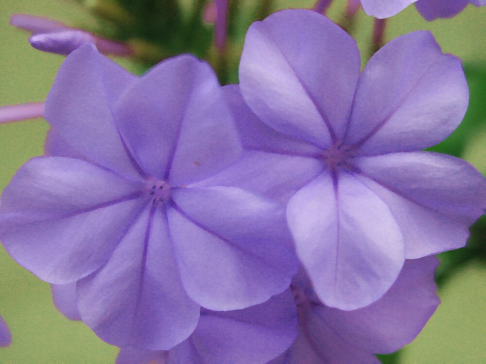 tiny purple flower by goofygirl1977
