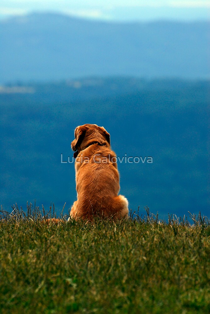 Lonely by Lucia Galovicova