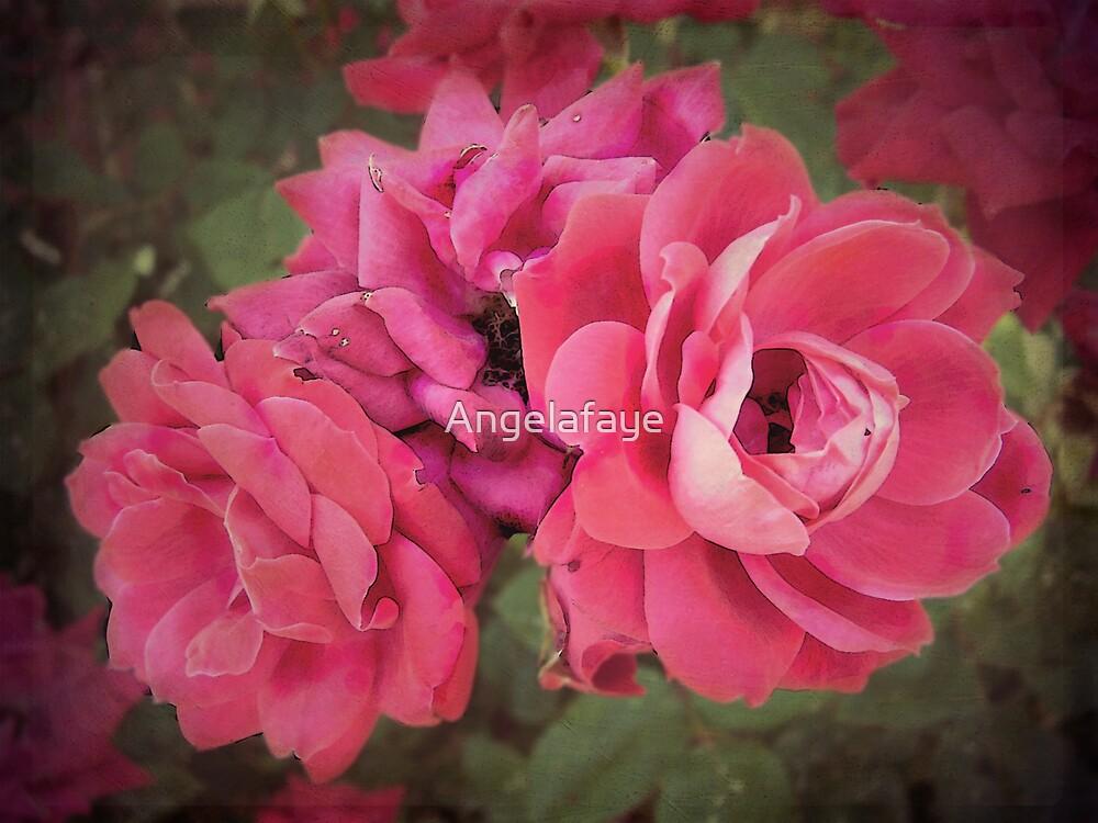 trio of Roses by Angelafaye