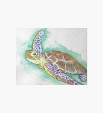 Sea Turtle Art Board