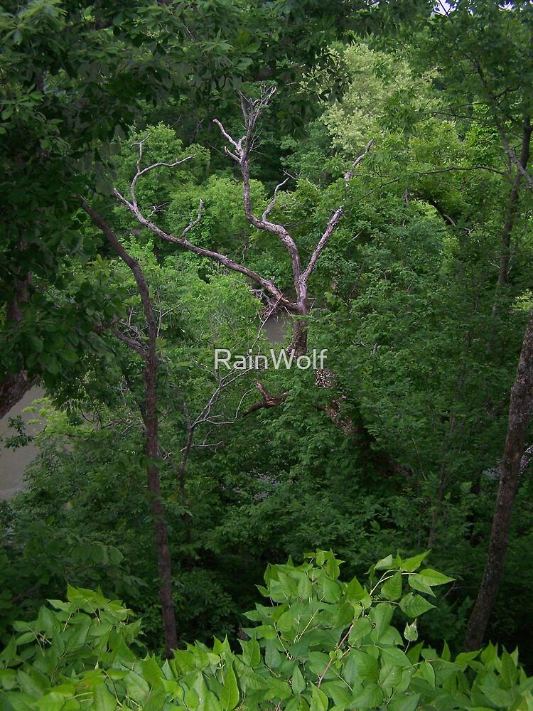 Wild Woods by RainWolf
