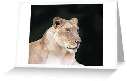Lioness by WTBird