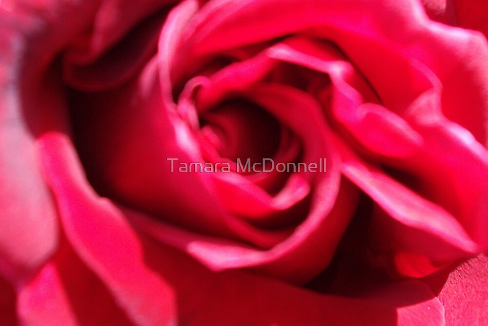 Roses are Red... by Tamara Lindsey