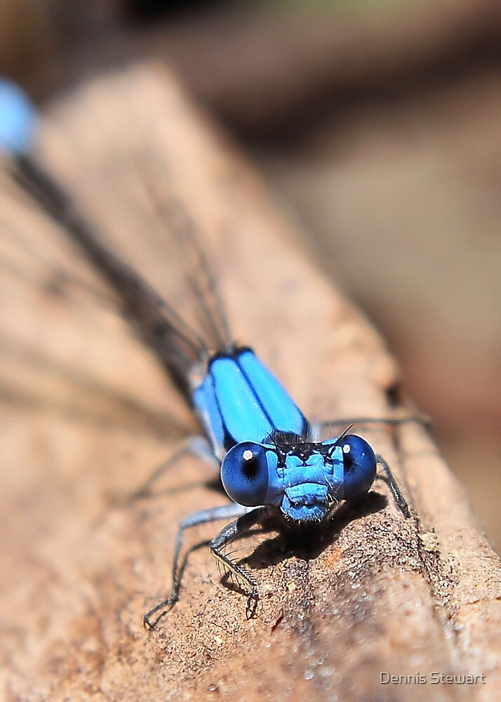 Damsel on Display by Dennis Stewart