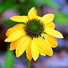 Yellow And Lime Coneflower by Cynthia48
