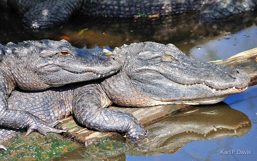 Gators by Karl F Davis
