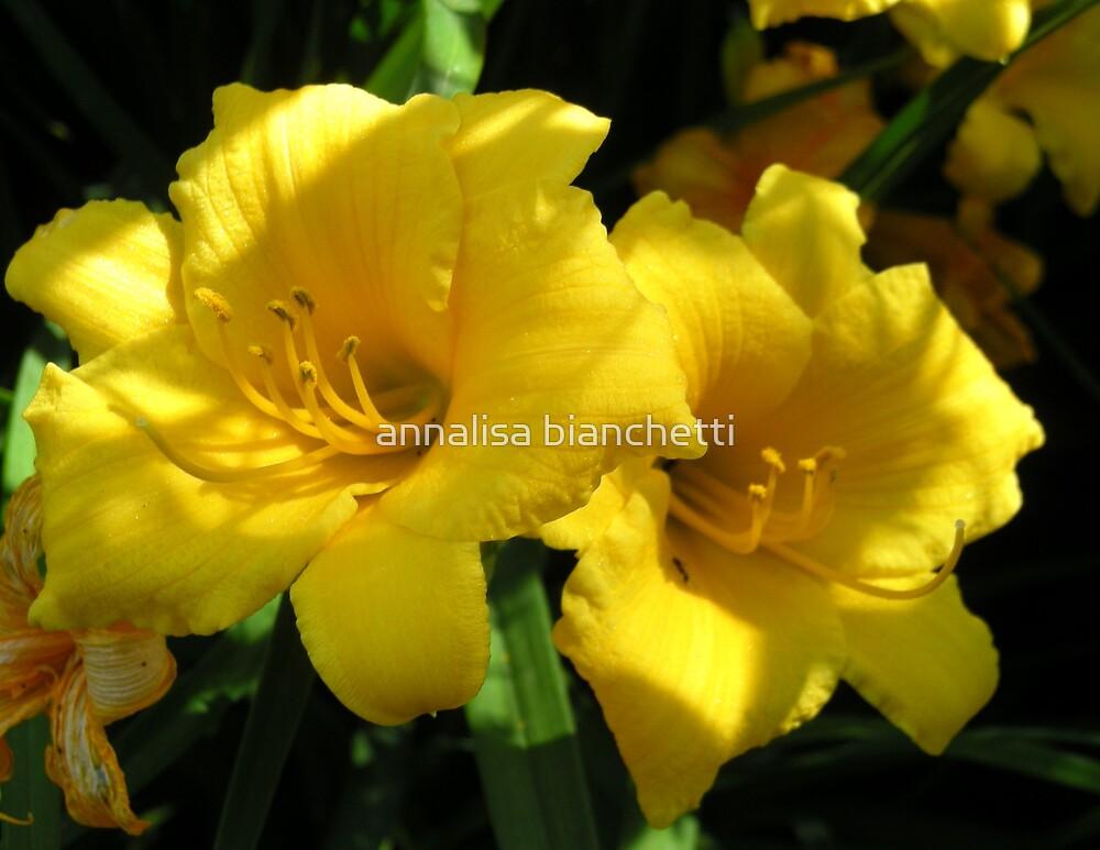 Yellow beauty by annalisa bianchetti