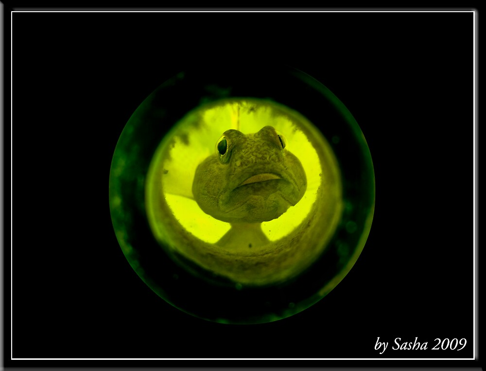 Fish in the bottle by msashabg