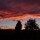 BJ watching the sunset by Josie Jackson
