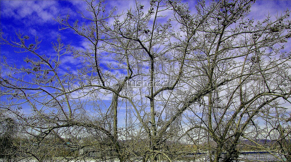 Branches by trisha22