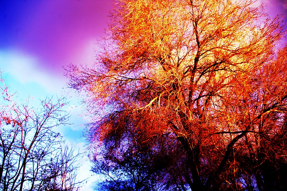 Tree in Hues of Dusk by JustSaul
