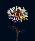 Royal Blue Daisy by Karin Taylor