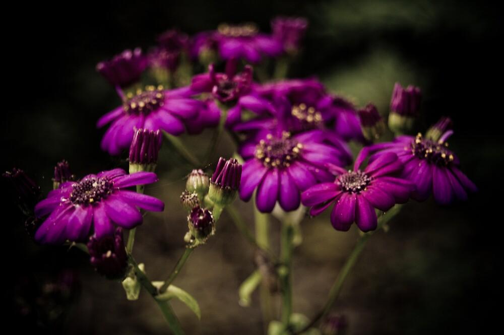 Purple Flowers by Rachel Blumenthal