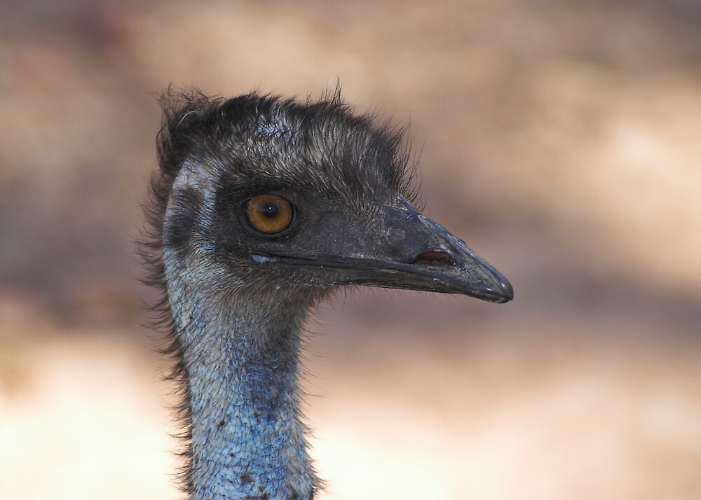 Emu by Melva Vivian