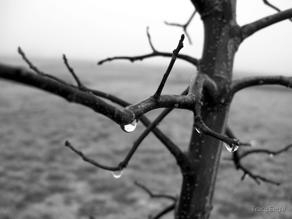 Raindrops on a Little Tree by Tracy Engle
