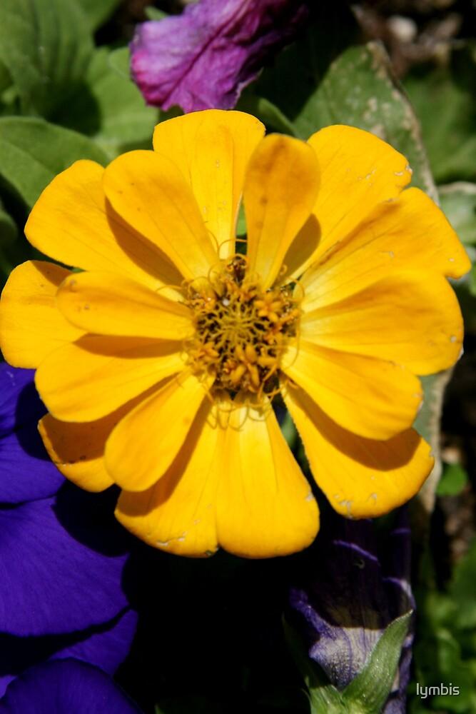 Sunshine Yellow by Lynn Stratton
