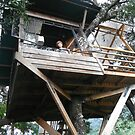 Sleeping In A Treehouse - Earth Lodge - Antigua - Guatemala - Central America by exploramum