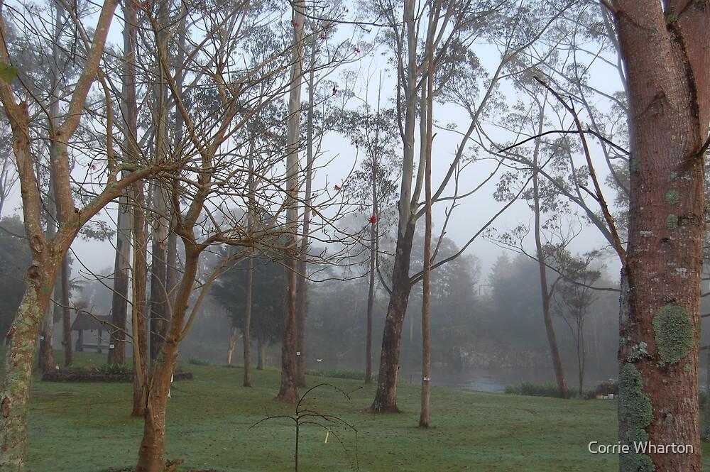 Morning Fog by Corrie Wharton