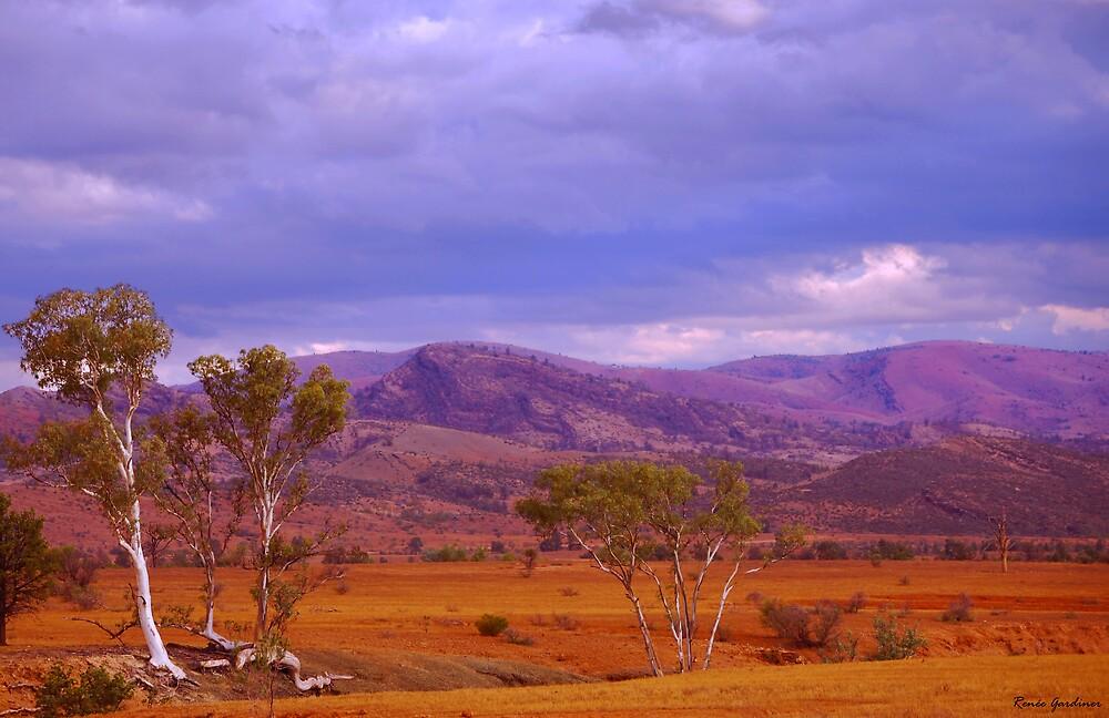 Flinders Ranges, South Australia by Renée Gardiner