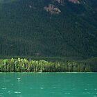 Sun Kissed  ~ Muncho Lake BC Canada by Barbara Burkhardt