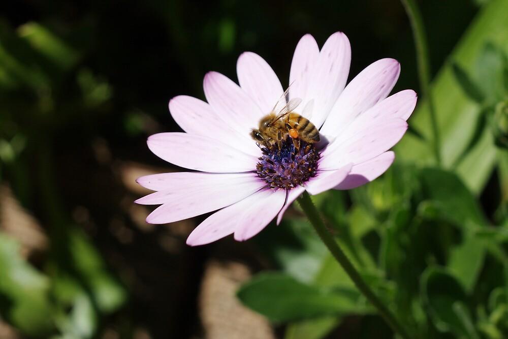 Bee On A Flower by Jennymd