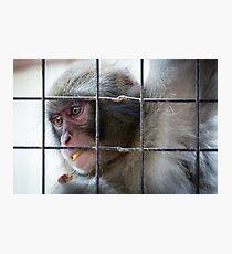 Monkey in Arashiyama Photographic Print