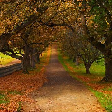 Avenue of Lost Souls by Bellabomb33