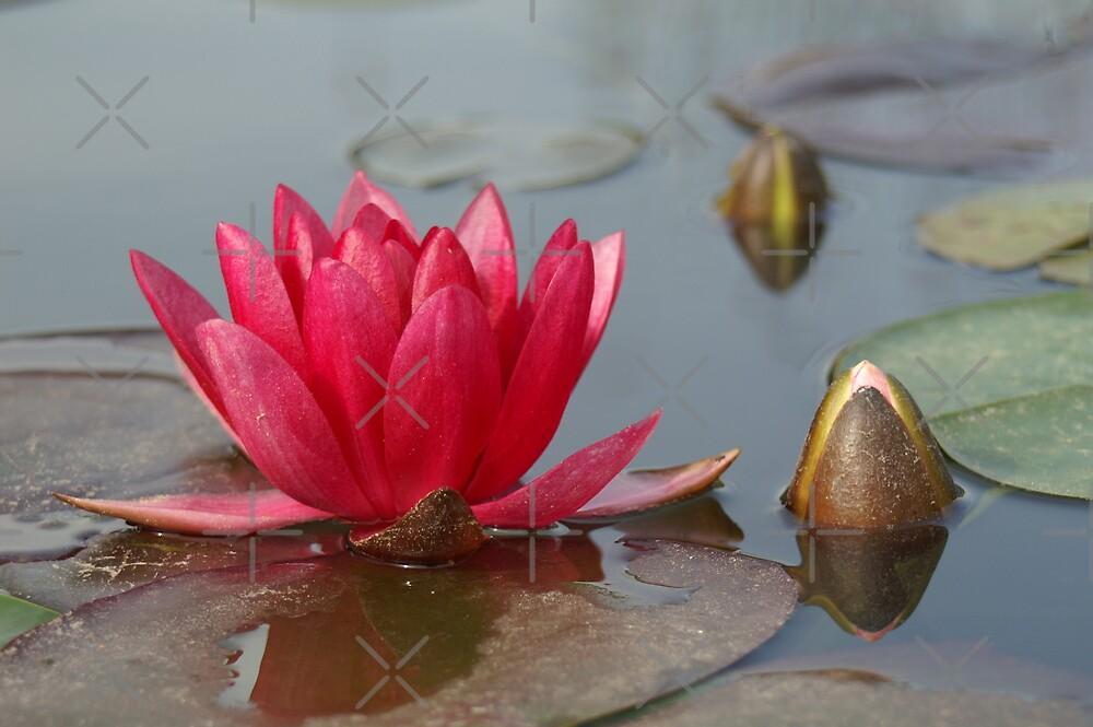 pink crown by poupoune