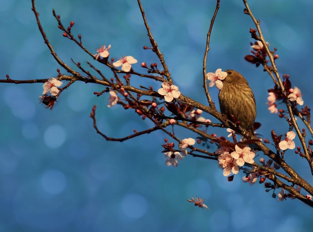 Bird n Blossoms by Susan Gary