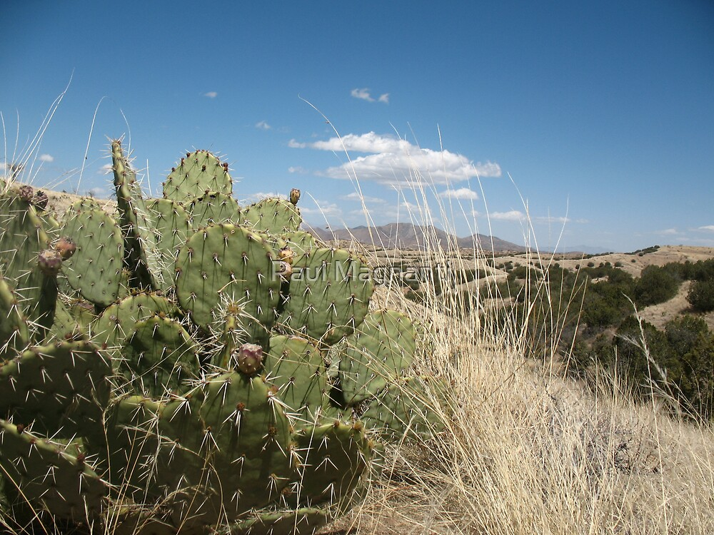 Prickly Pear by Paul Magnanti