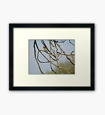 Finch In The Branches Framed Print