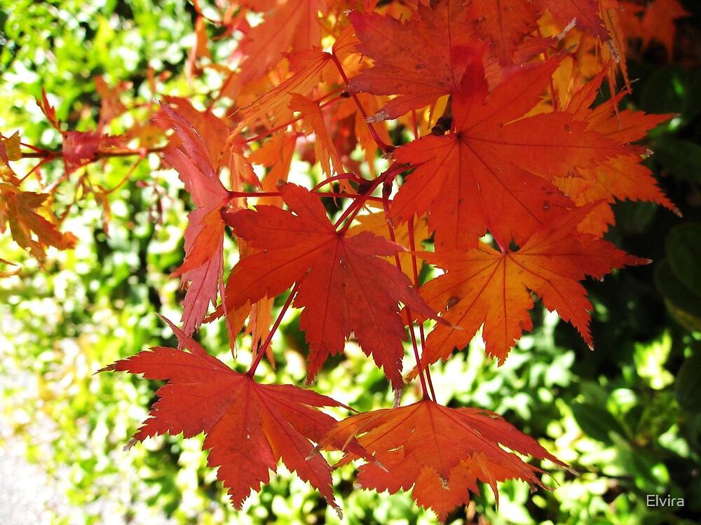Beautiful autumn by Elvira
