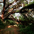 Path To No Where by Cheri Bouvier-Johnson