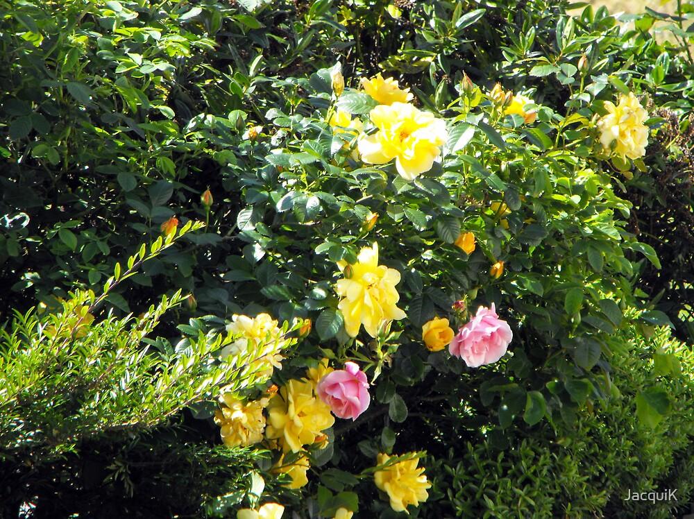 A Little Bit of My Garden. by JacquiK