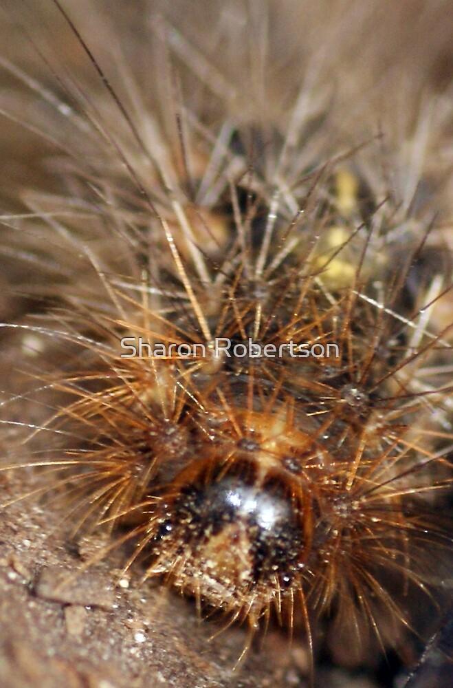 Fuzzy Wuzzy Caterpillar by Sharon Robertson