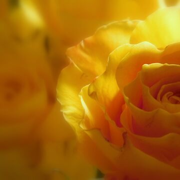 MACRO FLOWERS - 1       ^ by ctheworld