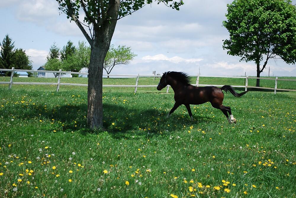 Jester Running by BernieG