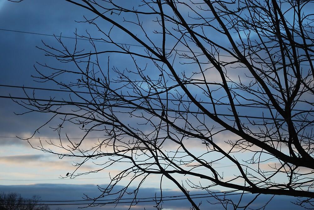 Tree at Dusk by BernieG