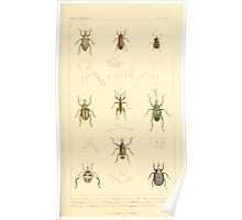 The Animal Kingdom by Georges Cuvier, PA Latreille, and Henry McMurtrie 1834  461 - Insecta Insects Poster