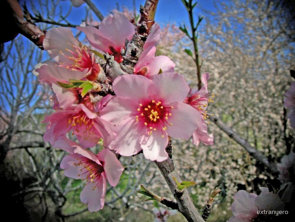Blossom by extranyero