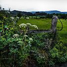 The Old Fence is Still Strong by Charles & Patricia   Harkins ~ Picture Oregon