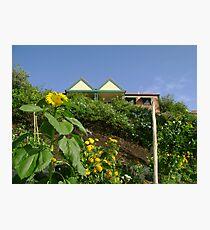 Community Garden Photographic Print