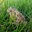 Toad by VaLover