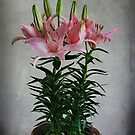 Asiatic Lily by G. David Chafin