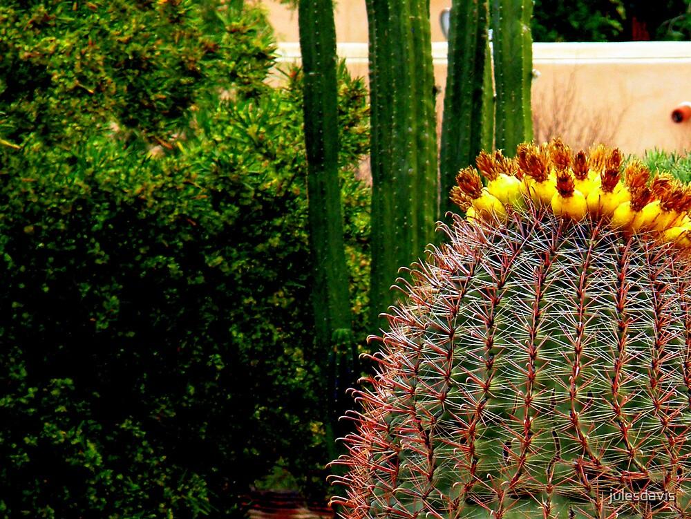 Cactus by julesdavis