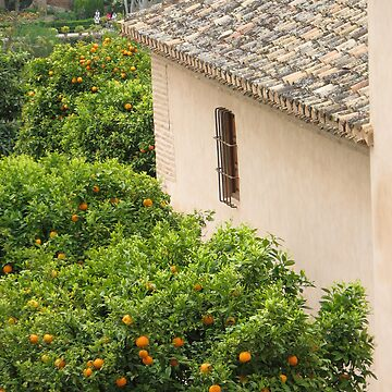 Granada, Spain - orange tree and house by petrolblue