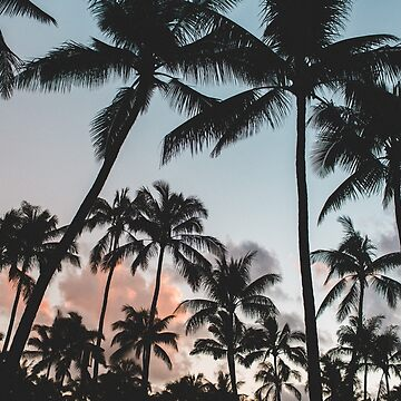Sunset Palm Trees at Beach by HYPEBEASTTT
