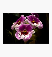 Orchids at the Conservatory Photographic Print