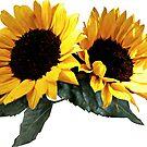 Sunny Sunflowers by Susan Savad